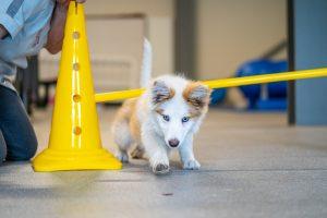 Balanstraining voor de pup