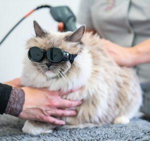 Laser therapie kat
